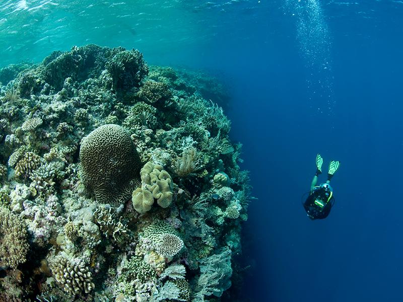 Wanci underwater, Wakatobi. Credit_ Jürgen Freund_WWF